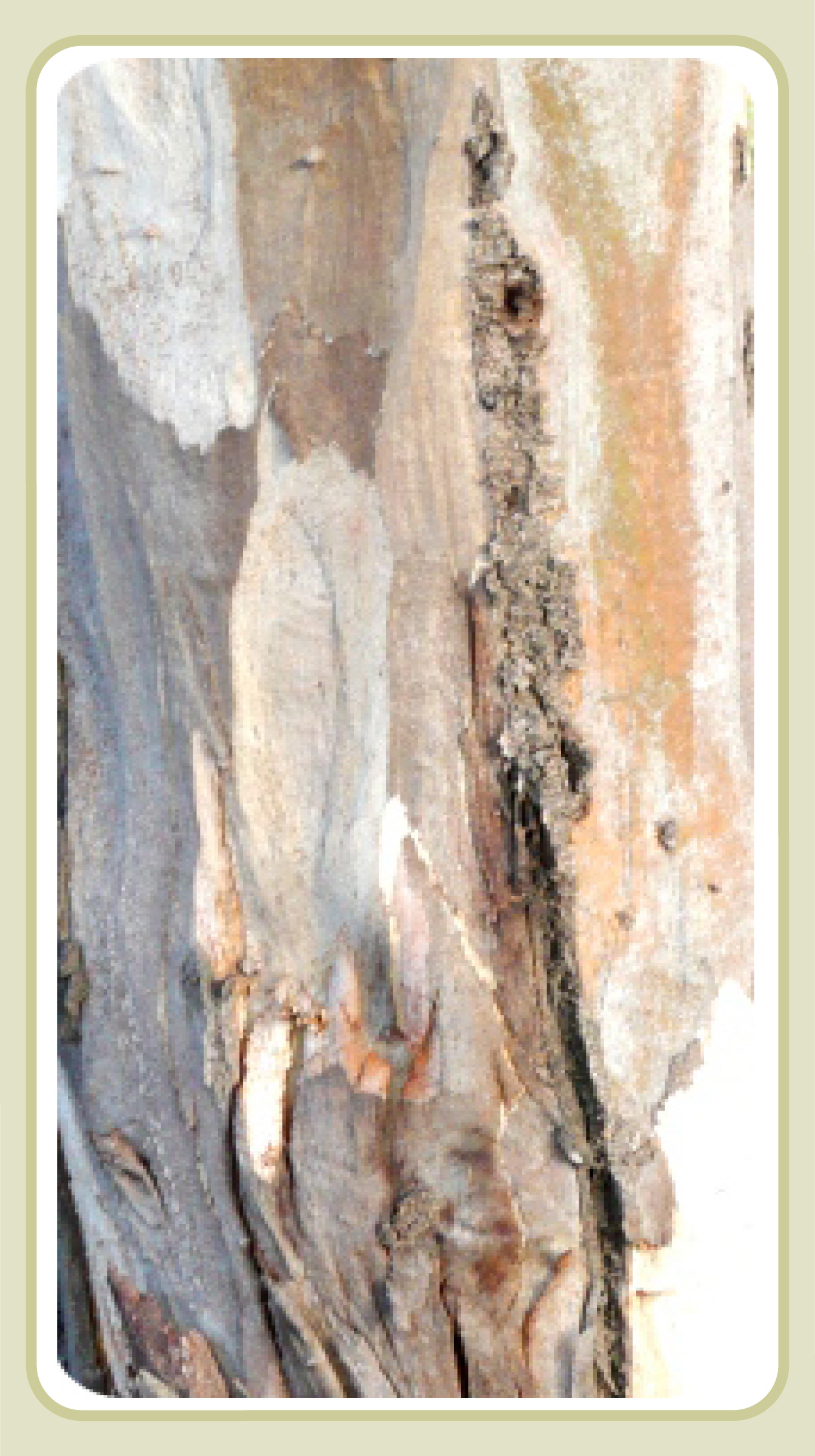 Blakely's red gum bark