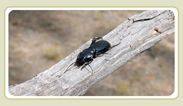 Beetle on branch