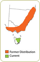Bettong Former and Current Distribution