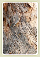 Yellow Box Bark